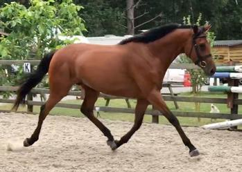AES BAY MARE