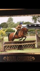 XXXXSOLDXXXXXXLovely 12.2 competition pony
