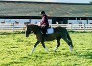 Poppy - sweet Allround mare!