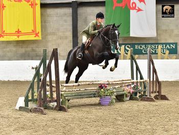 Stunning 4yrs mare