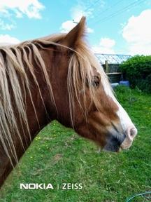 Beautiful show pony