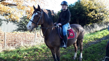 13.2hh allrounder mare 16yrs young