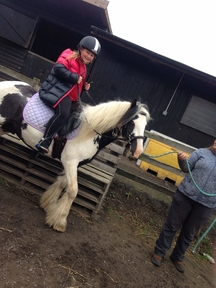 Beautiful 3 year old piebald cob gelding 12.3 to make approx 13.3h