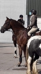 Stunning, talented Hunter/Eventer/SJ/Dressage gelding