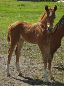 Top Quality Filly By First Impression