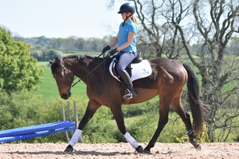 All rounder with eventing, riding club and dressage potential