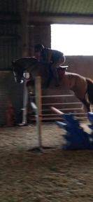Welsh D Project Pony