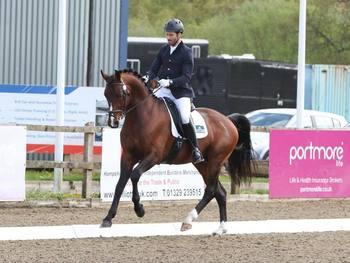 8 yo Dressage stallion by Waterprinz
