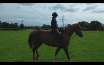 Exceptional 10 yr old liver chestnut mare. 16.1 hh. Irish sport horse.