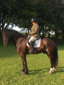 Awesome Temparement 15:3hh 9 year old Fresian cross Cob