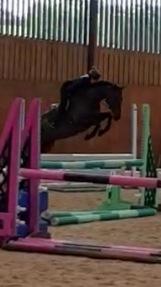 16.1 8yr Stunning mare