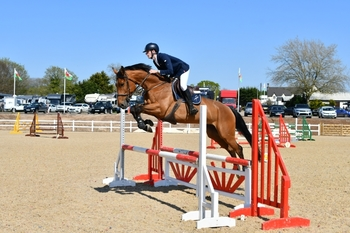5 year old showjump/event prospect