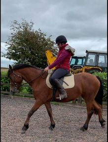 Beautiful 15hh Bay Registered Connemara Mare
