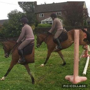 14hh, 7 year old Allround pony