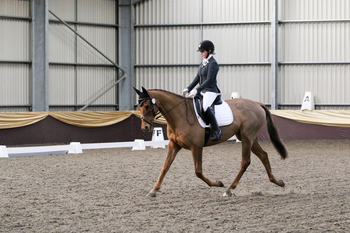 PC/RC Gentleman. 16.2hh, 11 y/o, Thoroughbred. Northumberland.