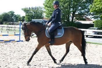 STUNNING IRISH SPORTS HORSE 15.2HH BAY GELDING 9 YEARS OLD