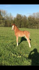 Stunning filly foal