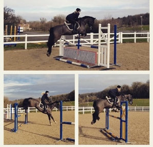 15.3hh 13 years old Welsh Section D gelding.