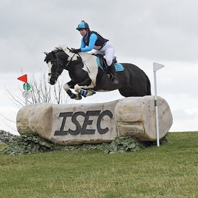 Fabulous PC/RC/Eventing Horse