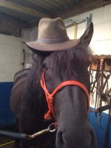 Wanted horse 13.2hh to 16.hh