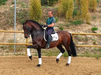 Top trained barock PRE Stallion