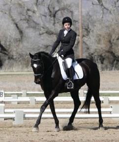 8 year old stunning black 14.2 horse