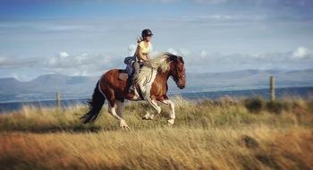 Fun pleasure horse!! For sale