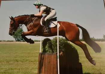 16.1 Sports Horse