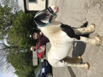13'3 Cob horse
