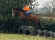 Stunning 15.3hh Chunky Bay mare