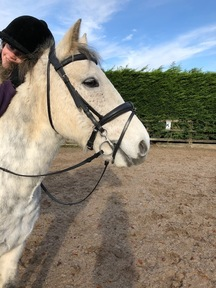 Stunning Irish Gelding grey Connemara for sale, East Riding of Yorkshire