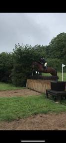*WANTED* looking for a full loan 14.2hh+