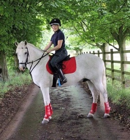 Fantastic Genuine 14.2 gelding
