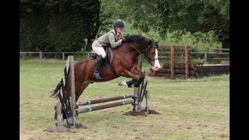 Great jumping pony