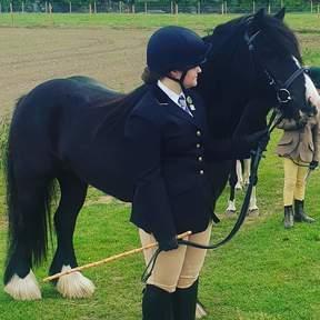Black Cob mare 4 1/2yrs old