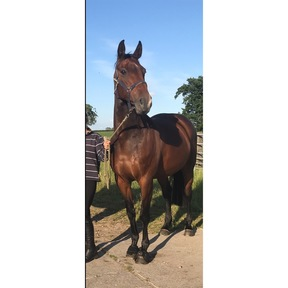 Talented showjumping mare with the pedigree to match