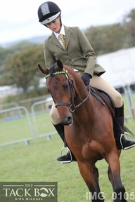 Ideal worker/show hunter/show jumper