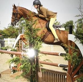 14 hand sports pony