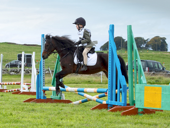 Junior games / LR / FR / family pony for sale- now sold