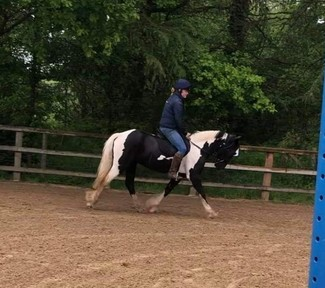 14.1hh Potential All rounder