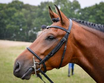 *REDUCED* Flashy, well mannered and safe gelding for sale