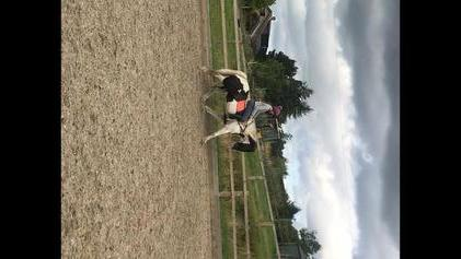 15.1 6 years coloured mare