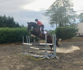 Potential show jump / dressage / event type