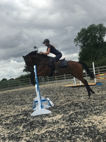 Exciting 7yr old gelding with huge potential