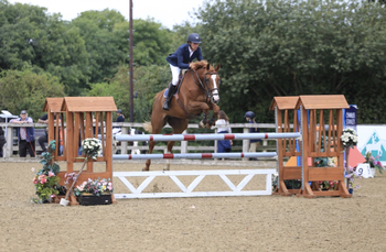BEAUTIFUL 16.3hh 10YO KWPN CHESTNUT MARE