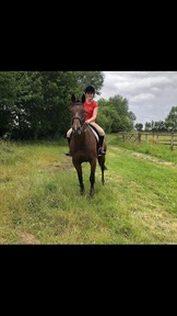 Lovely 16/2, 9 yr old mare