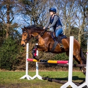 Stunning and talented 15hh all-rounder/riding club/pony club mare