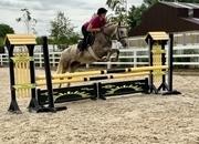 Lorraine - lovely quiet mare!
