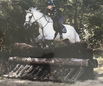 Fabulous all rounder/ pony club pony