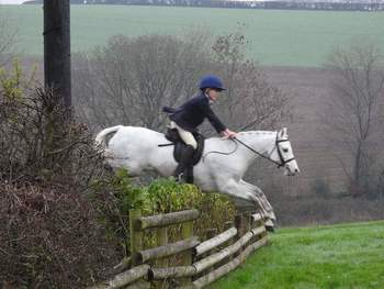 Registered Grey Connemara Mare 8 Year old - The Ultimate Child's Pony
